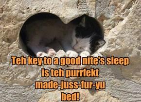 Teh purrfekt bed!