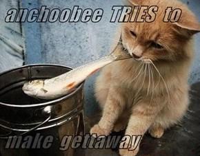anchoobee  TRIES  to  make  gettaway