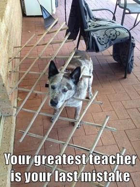 Your greatest teacher is your last mistake