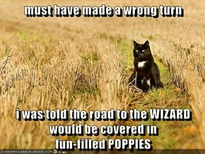 must have made a wrong turn  i was told the road to the WIZARD                               would be covered in                                                  fun-filled POPPIES