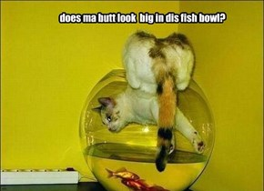 does ma butt look  big in dis fish bowl?