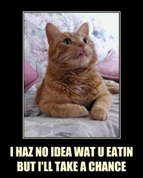 I HAZ NO IDEA WAT U EATIN   BUT I'LL TAKE A CHANCE
