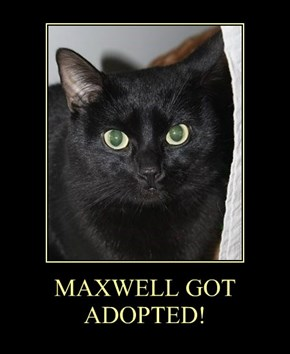 MAXWELL GOT ADOPTED!