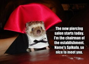The new piercing salon starts today. I'm the chairman of the establishment. Name's Spikula, so nice to meet you.