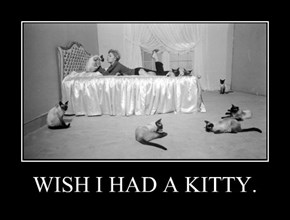 WISH I HAD A KITTY.