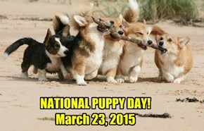 All doggie lovers celebrate! Because it's NATIONAL PUPPY DAY! March 23, 2015