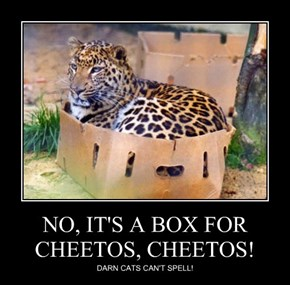 NO, IT'S A BOX FOR CHEETOS, CHEETOS!