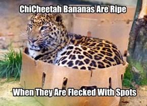 Ya ya, Leopard.  Whatever