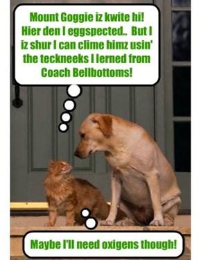 A Bwave Skolar on Coach Bellbottoms' Mountain Climbing Team acksepts teh challenj to clime Mount Goggie aka Sniffer (Coach Bellbottoms' foster brudder!)..