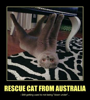 RESCUE CAT FROM AUSTRALIA
