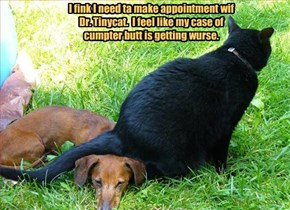 I fink I need ta make appointment wif Dr. Tinycat.  I feel like my case of cumpter butt is getting wurse.
