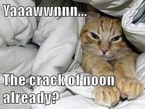 Go Back to Bed, It's Caturday