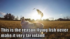 This is the reason flying fish never make it very far inland.