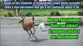 No mr. Anchobee! Dun run awae! Iz gonna catch u  mr. Anchobee!