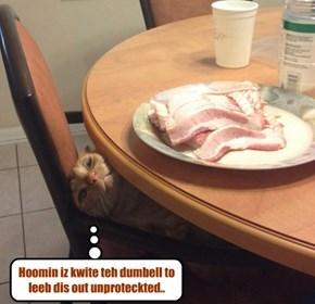 Kittie assesses teh situashun..