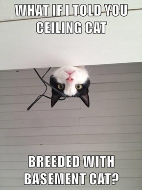 WHAT IF I TOLD YOU CEILING CAT  BREEDED WITH BASEMENT CAT?