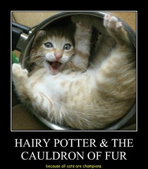 HAIRY POTTER & THE CAULDRON OF FUR