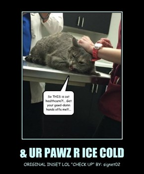 & UR PAWZ R ICE COLD