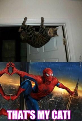 Spider-Cat, Spider-Cat