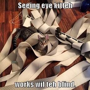 Seeing eye kitteh  works wif teh blind.