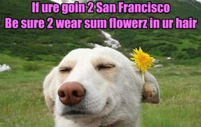 If ure goin 2 San Francisco Be sure 2 wear sum flowerz in ur hair