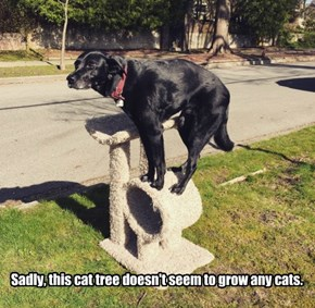Sadly, this cat tree doesn't seem to grow any cats.