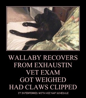 WALLABY RECOVERS FROM EXHAUSTIN VET EXAM  GOT WEIGHED HAD CLAWS CLIPPED