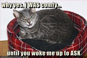 why yes, i WAS comfy...  until you woke me up to ASK
