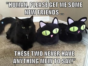 """HUMAN, PLEASE GET ME SOME NEW FRIENDS ...  THESE TWO NEVER HAVE ANYTHING MEW TO SAY!"""