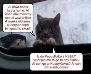 Der arlots ob kitties wunting to go to da renown KuppyKakes.