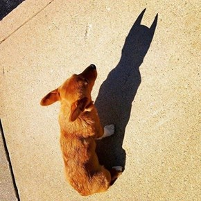 He's The Dog Gotham Deserves