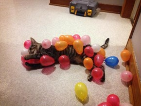 This is Why We Can't Have Birthday Parties