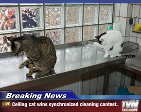 Breaking News - Ceiling cat wins synchronized cleaning contest.