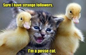 Sure I have strange followers.