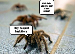 One spider is creepy enough. What if they could scream? Yikes
