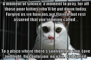 A moment of silence, a moment to pray, for all those poor kitties who'll be put down today. Forgive us we humans are flawed. but rest assured that you're being called ..  To a place where there's sunlight, no rain. Love and light. No confusion, no pain. G