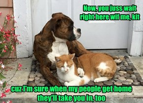 Your dog knows you have a tender heart