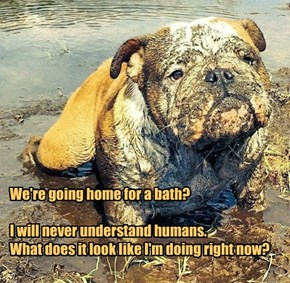 We're going home for a bath?   I will never understand humans.  What does it look like I'm doing right now?