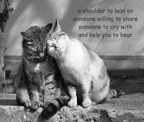 a shoulder to lean on someone willing to share someone to cry with and help you to bear