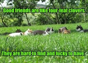 Good friends are like four-leaf clovers.