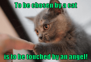 To be chosen by a cat   is to be touched by an angel!