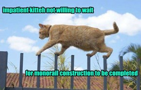 impatient kitteh not willing to wait                             for monorail construction to be completed
