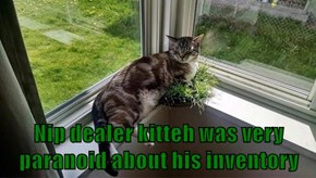 Nip dealer kitteh was very paranoid about his inventory