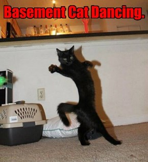 Basement Cat Dancing.