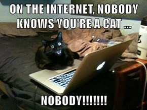 ON THE INTERNET, NOBODY KNOWS YOU'RE A CAT ...  NOBODY!!!!!!!