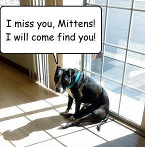 I miss you, Mittens! I will come find you!