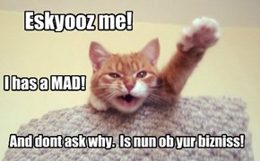 Kitteh has a mad!