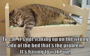 To cat, it's not waking up on the wrong side of the bed that's the problem.                             It's having to wake up!