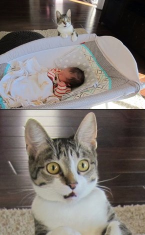 Cats Truly Don't Know How to Handle Babies