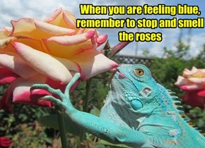 When you are feeling blue, remember to stop and smell the roses